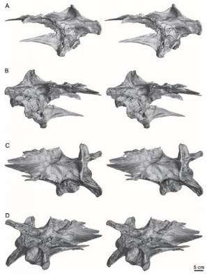 Scientists reveal the braincase anatomy of the late Cretaceous tyrannosaurid Alioramus