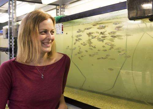 Study sheds light on genetics of how and why fish swim in schools