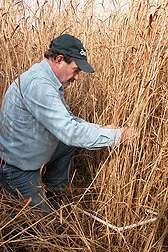 A study of switchgrass for home heating in the northeast
