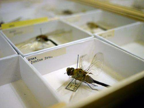 Entomologist uses ScholarSphere repository to preserve rare insect collection