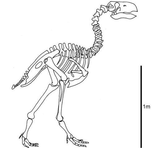 Research suggests terror bird's beak was worse than its bite
