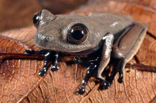 60 possible new species found in Suriname forest