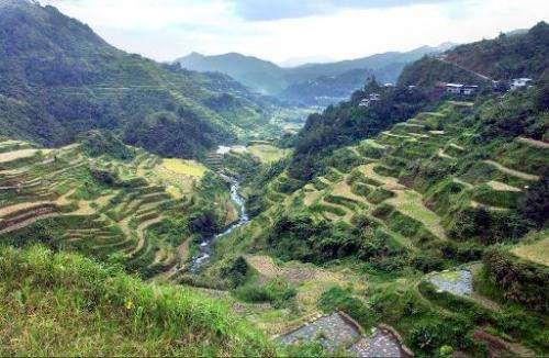 This file photo, taken on October 2, 2003, shows a bird's eye view of the Banaue rice terraces