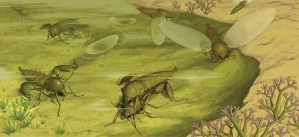 Researchers find Jurassic strashilids not a parasite after all