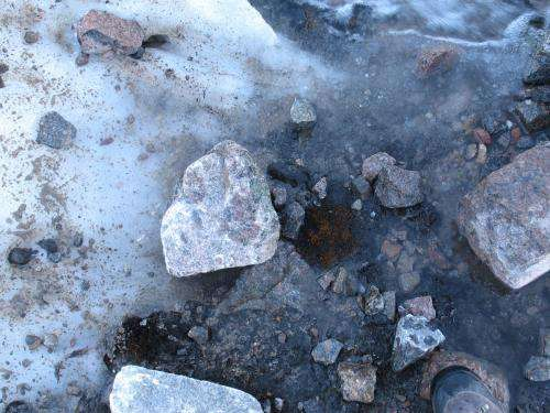 Researchers find 400 year old plants in Arctic able to grow anew as glaciers retreat