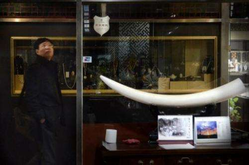 This picture taken on February 20, 2013 shows a Chinese man walking past an ivory tusk display at a shop in Beijing