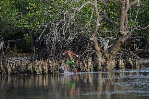 A boy walks past Mangrove trees at Honda Bay in Puerto Princesa, Palawan island, south of Manila, on April 24, 2012