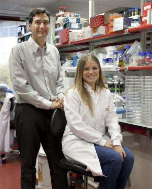 A CNIO team is the first to produce embryonic stem cells in living adult organisms