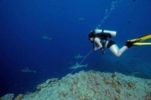 A diver looks at reef sharks off the coast of the Pacific island nation of Palau, on June 20, 2009