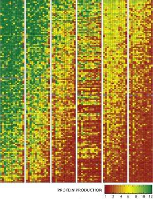 A hidden genetic code for better designer genes