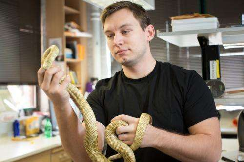 Ancestor of snakes, lizards likely gave birth to live young
