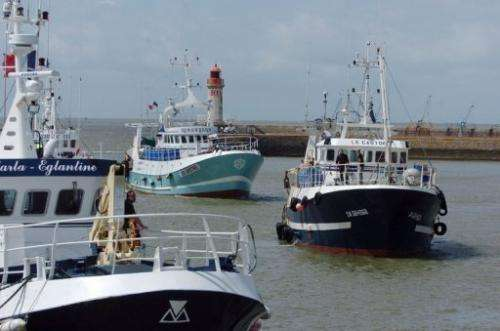 Anchovy fishing boats arrive in the port of Saint-Nazaire, western France on July 10, 2007