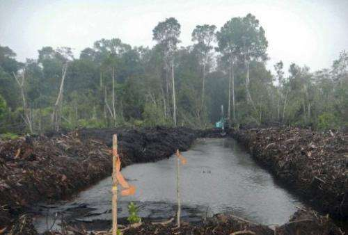A new peat canal in a peatland forest in West Kalimantan province of Indonesia's Borneo island, March 16, 2013