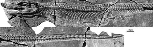 A new thalattosaur found from the Upper Triassic of Guanling, Guizhou, China