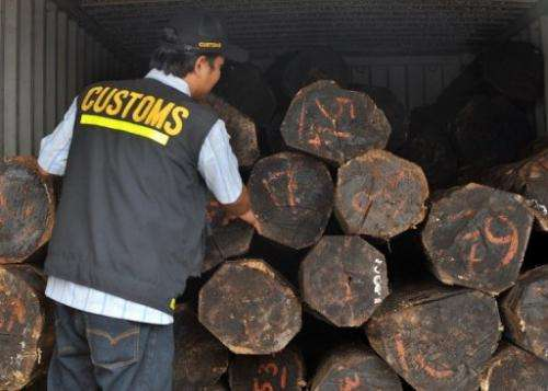 An Indonesian customs officer inspects illegal logs placed inside containers at a Jakarta port on September 20, 2011