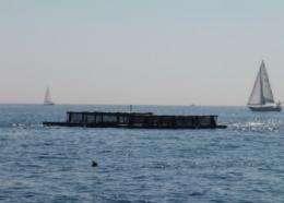 Aquaculture: helping blue turn green
