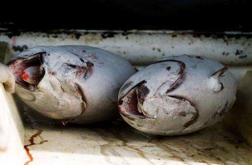 A record 2.65 million tonnes of tuna was hauled from the Pacific last year, accounting for 60 percent of the global catch