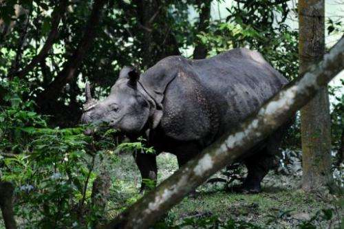 A rhino is seen at Kaziranga National Park, some 250 km east of Guwahati, on September 27, 2012