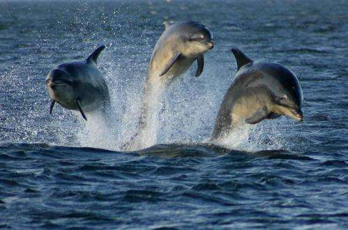 Assessing noise impact of offshore wind farm construction may help protect marine mammals