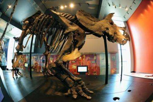 A Triceratops greets visitors at the Natural History Museum of Los Angeles  on July 7, 2011