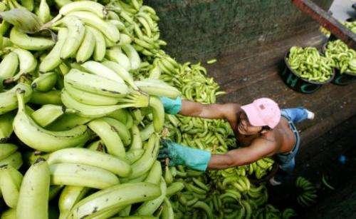 Teen from Turkey turns bananas into plastic