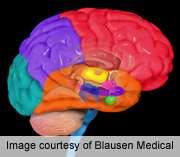 Baboons shed light on human brain evolution