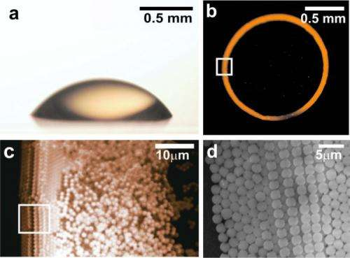 Basic science in evaporating droplets