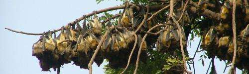 Bats More Likely to Carry Disease than Rodents, New Colorado State University Study Says