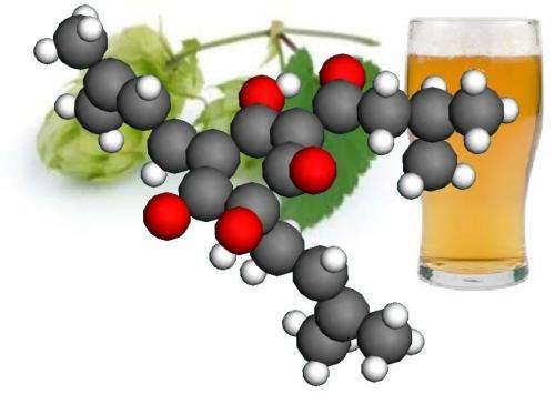 Beer's bitter compounds could help brew new medicines