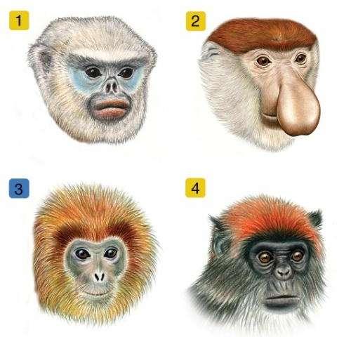 Biologists find an evolutionary Facebook for monkeys and apes