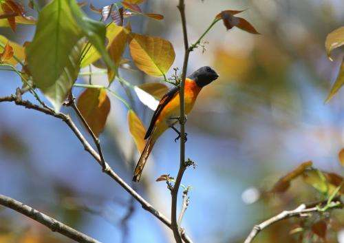 Birds may need a hand to weather climate change