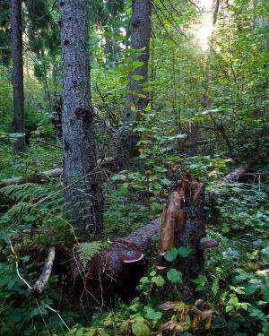 Mixed forests: A missed opportunity?