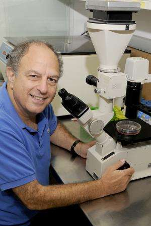 Blocking key enzyme in cancer cells could lead to new therapy