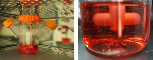 Brains on demand: Scientists succeed in growing human brain tissue in 'test tubes'