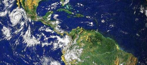 Bridge species drive tropical engine of biodiversity