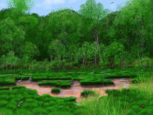 Buried leaves reveal precolonial eastern forests and guide stream restoration
