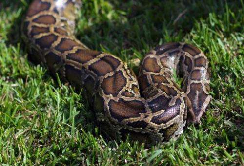 Canadian police have recovered 40 pythons from a hotel room in Ontario