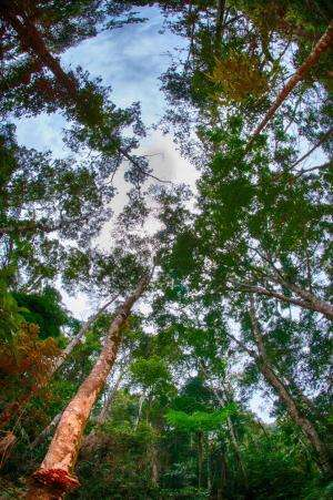 Carbon storage recovers faster than plant biodiversity in re-growing tropical forests