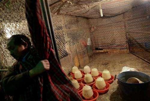 China reports 2 more cases of new bird flu virus
