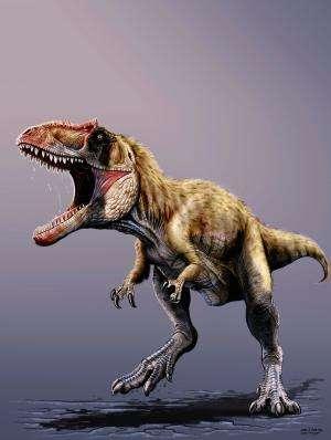 Colossal new predatory dino terrorized early tyrannosaurs
