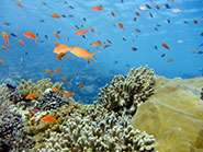 Cooling ocean temperature could buy more time for coral reefs