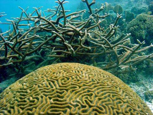 Coral reefs suffering, but collapse not inevitable, researchers say