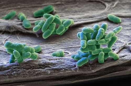 Crystal structure reveals light regulation in cyanobacteria