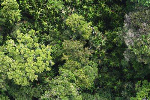 Researchers estimate 16,000 tree species in the Amazon with half of all trees belonging to just 227 species