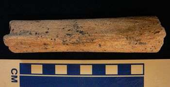 Archeologists date human femur found in northern Britain to 10,000 years ago