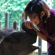 Deadly virus threatens endangered elephants