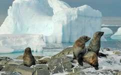 Dead seals serve conservation boost