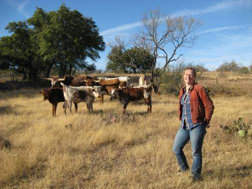 Decoding the genetic history of the Texas longhorn