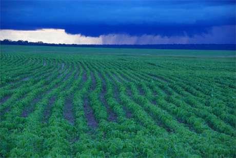 Deep, permeable soils buffer impacts of crop fertilizer on Amazon streams, MBL study finds