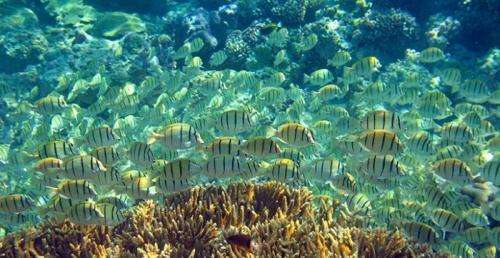Disappearance of coral reefs, drastically altered marine food web on the horizon